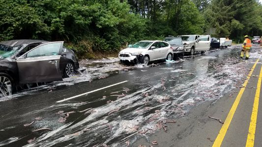 'Slime Eels' Explode on Highway After Bizarre Traffic Accident