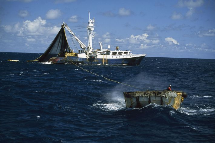 This boat is fishing for tuna, a species commonly fished out of the high seas.