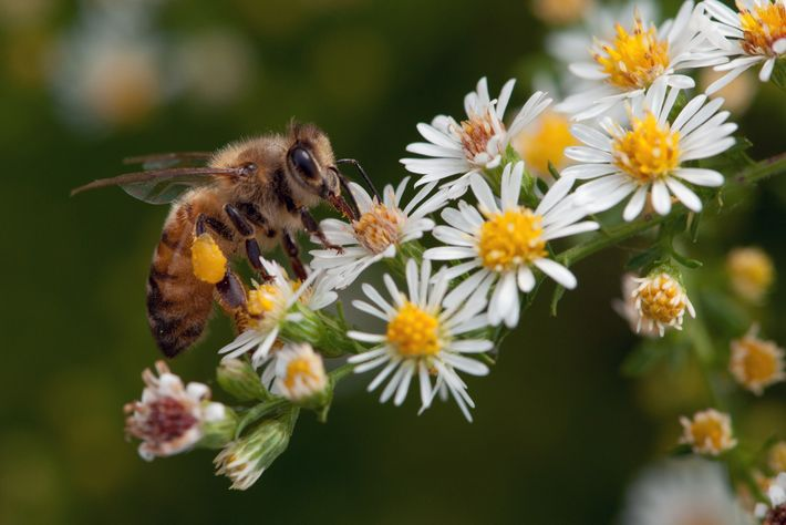 Bees and similar creatures pollinate more than a third of our food crops, meaning significant declines ...
