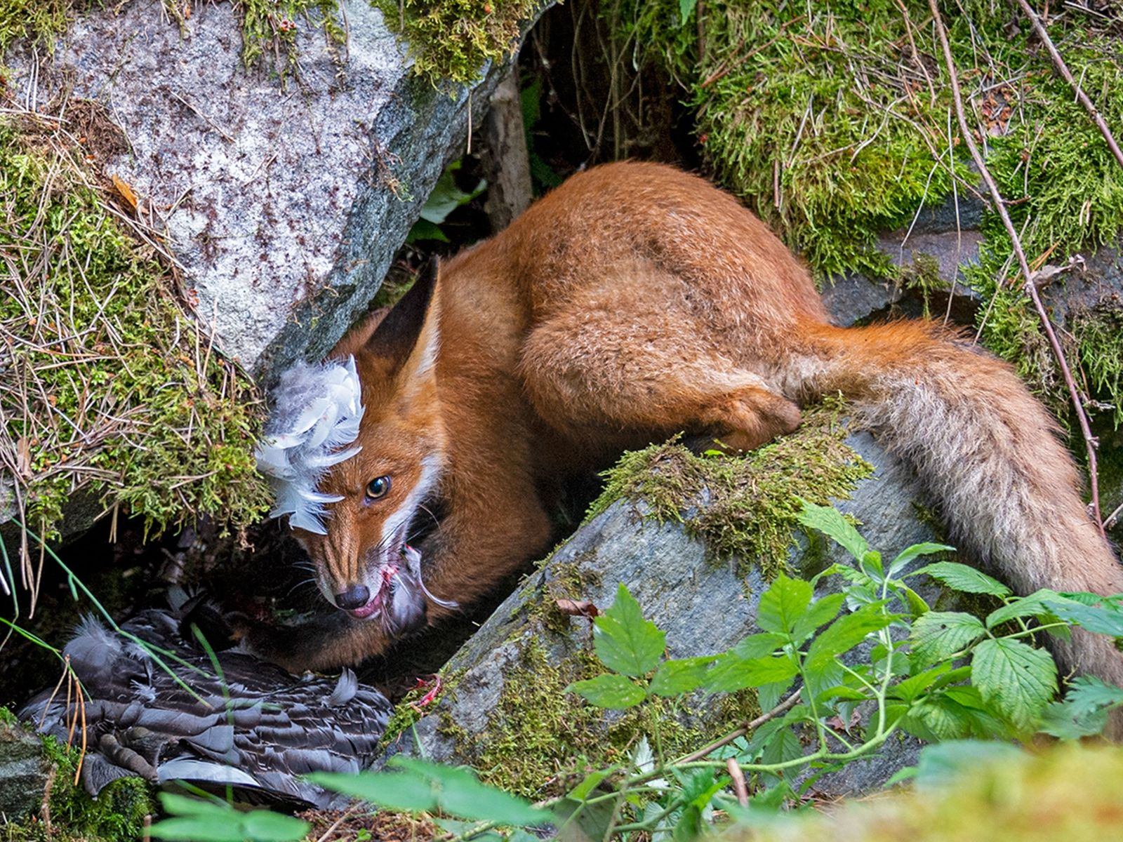 Thirteen-year-old Liina Heikkinen of Finland won Young Wildlife Photographer of the Year, the competition's other top ...