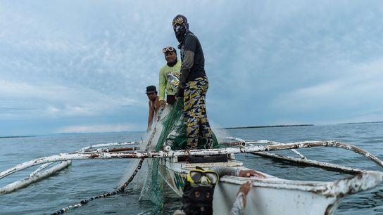 Fishermen in the waters of Bohol have seen declining catches for years. Some have turned to ...