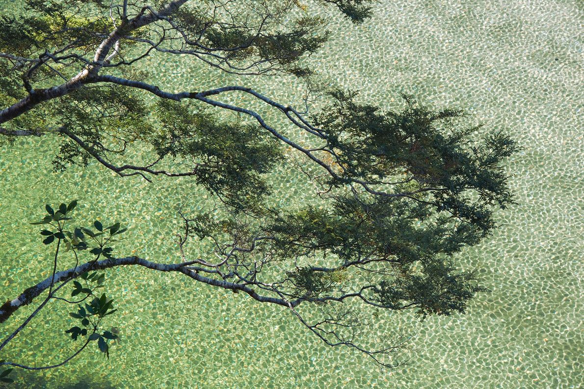 Beech branches and a broadleaf sapling overhang Lake Ada in Fiordland National Park, South Island, New ...