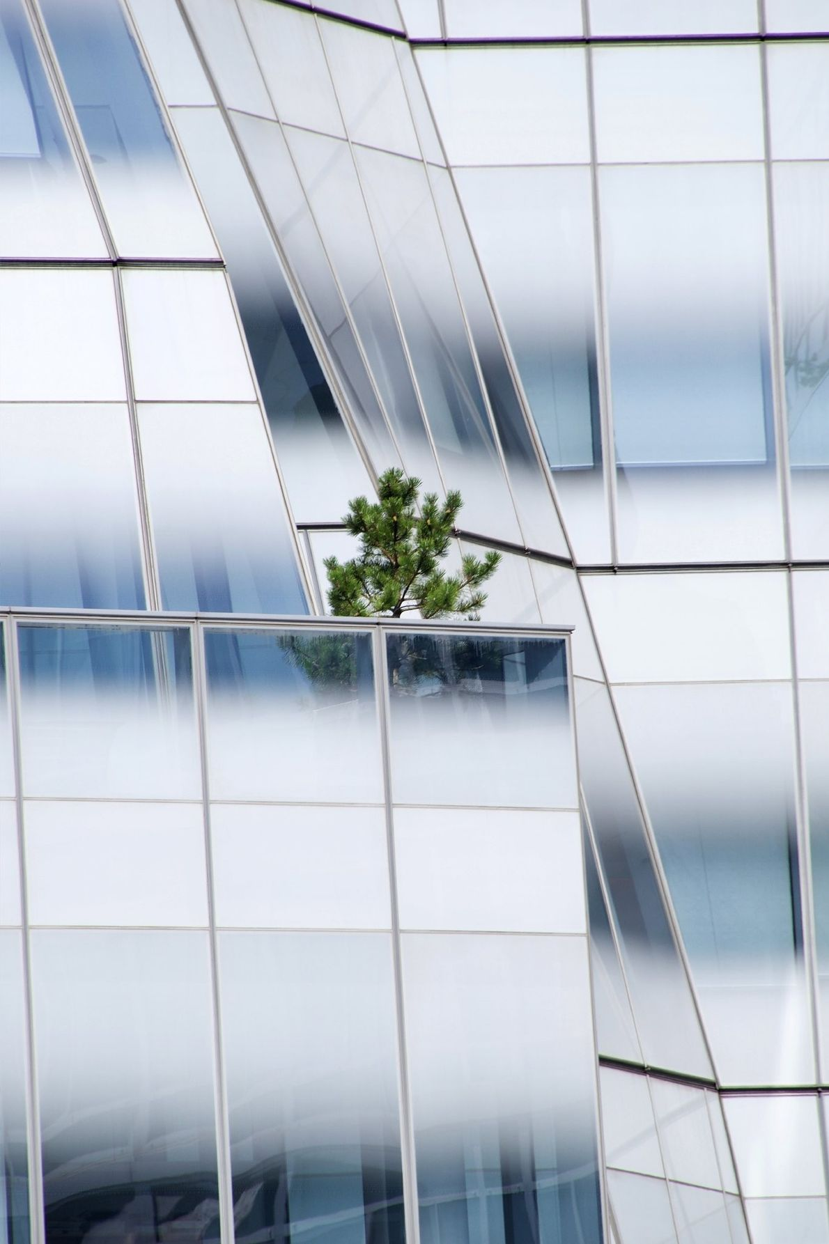 Your Shot photographer Carolina G. Paris made this image of a tree on a balcony in ...