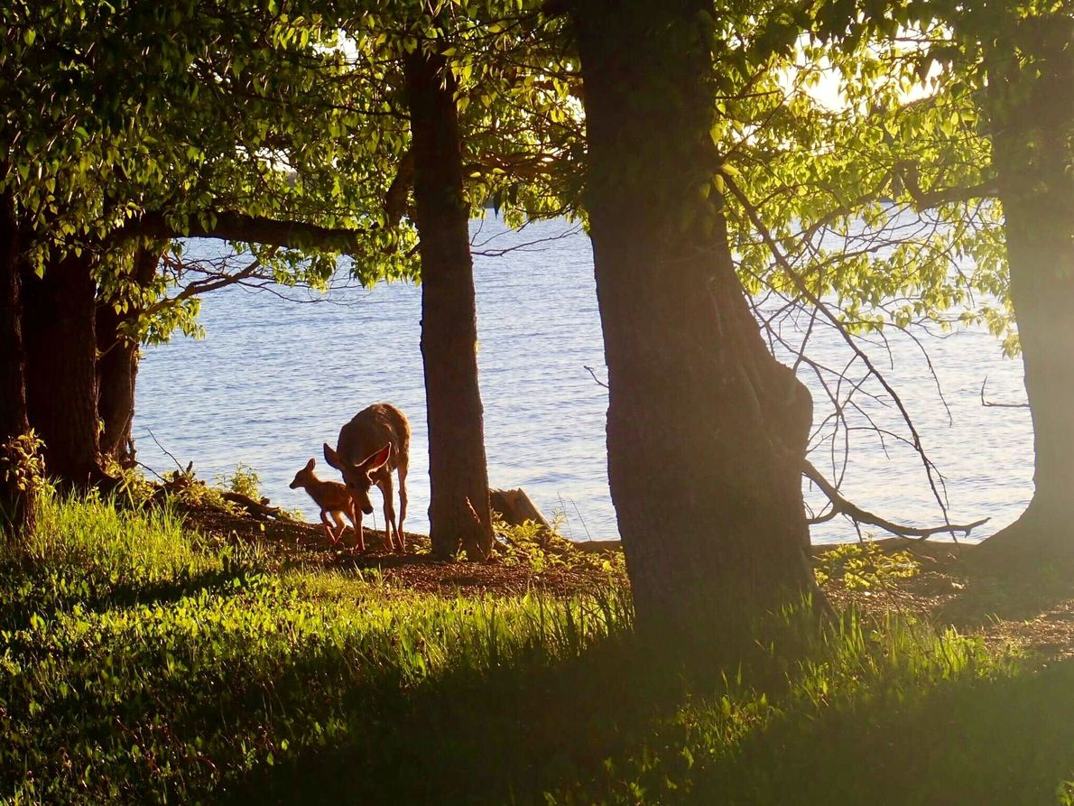 Your Shot photographer Karen S. spotted this doe and her fawn while on a walk near ...