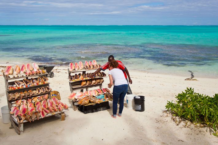 A woman shops for conch shells at a beach-side souvenir stand in Turks and Caicos. The ...
