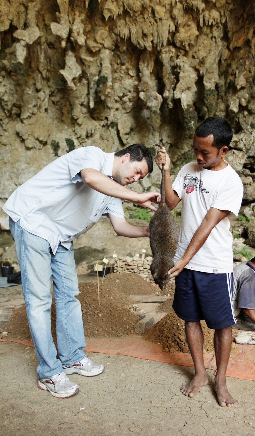 Matthew Tocheri (left) and Bonefasius Sagut measure a modern giant rat at Liang Bua.