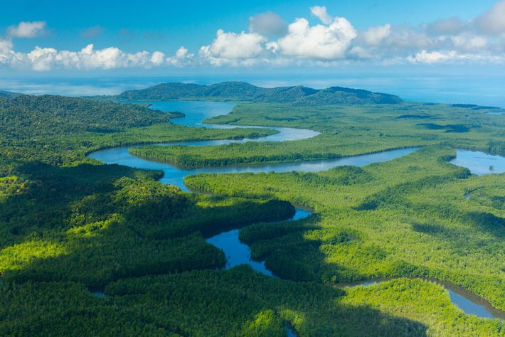 Scientists are searching Costa Rica's Térraba-Sierpe wetlands, believed to be one of two remaining hotspots for ...