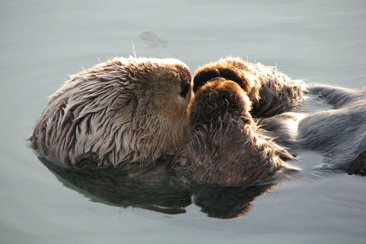"""I caught this little guy dozing at the boat dock in Valdez, Alaska,"" writes Your Shot ..."