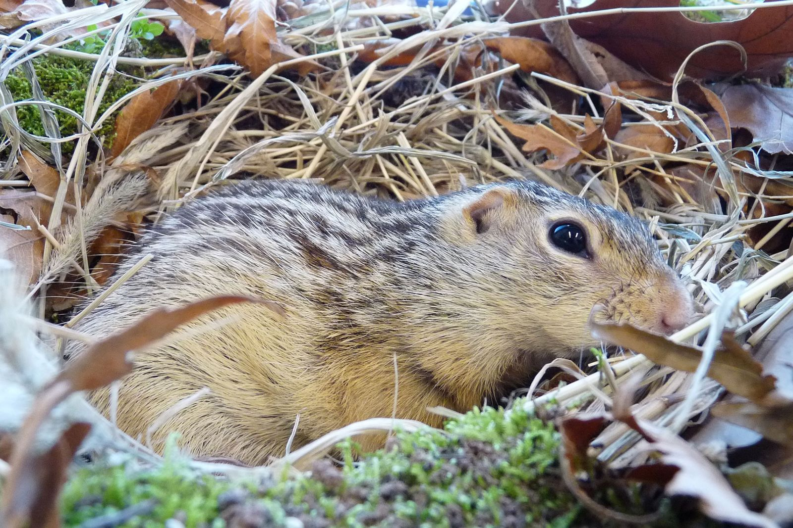 How Do Squirrels Deal With Cold? They May Not Feel It Like Us