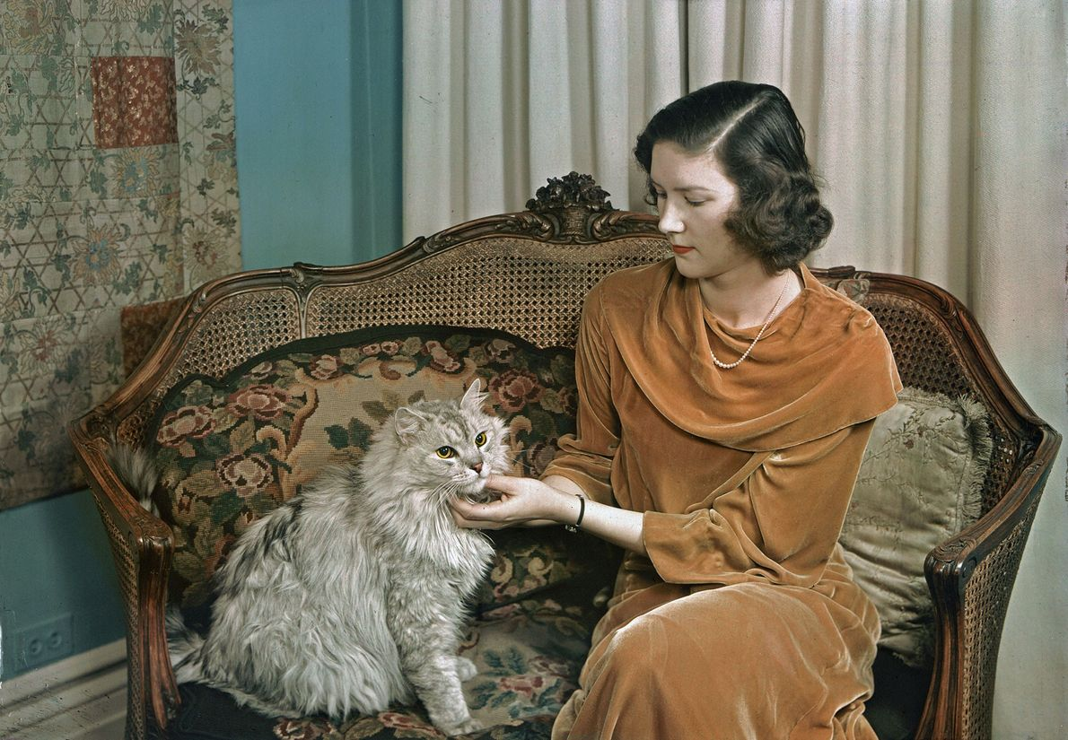 An owner lovingly strokes her Persian in New York City. The 1938 National Geographic article captioned ...