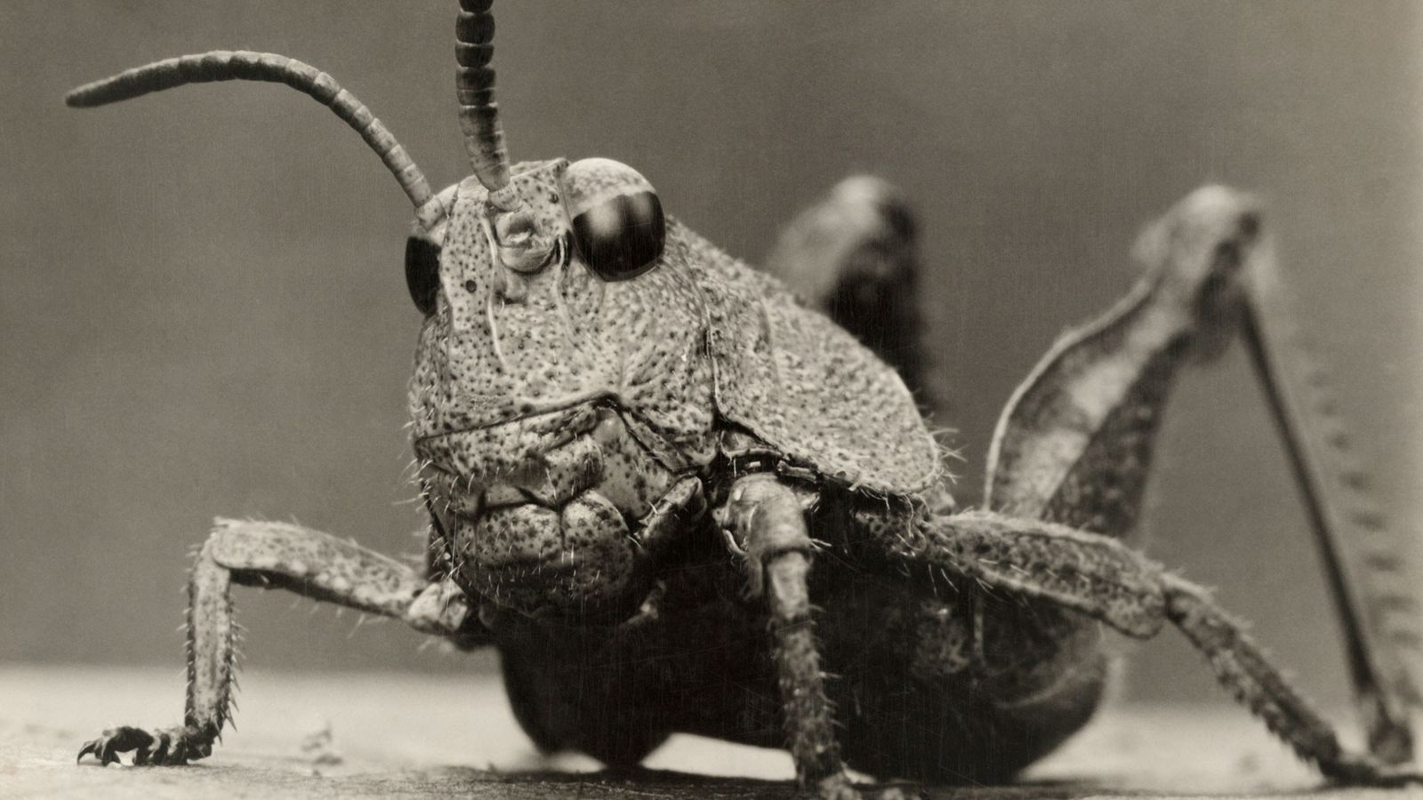 At least 18,000 species of grasshoppers hop the world's continents. All have strong jaws used for ...