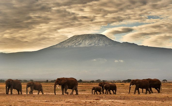 """Other than the threat posed by poaching, """"fostering healthy coexistence between local people and African elephants,"""" ..."""