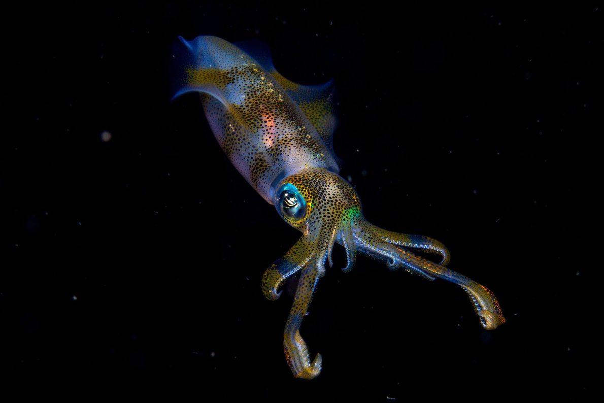 Fourteen-year-old Cruz Erdmann won Young Wildlife Photographer of the Year with this underwater image of an ...