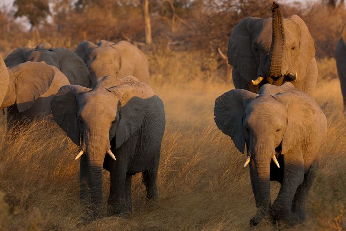 China's ban on ivory trade went into effect on the final day of 2017. Hong Kong ...