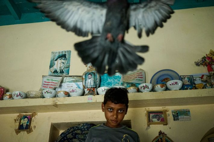 A young boy plays with a pigeon in Zohra district, northwest of the northern Yemeni port ...
