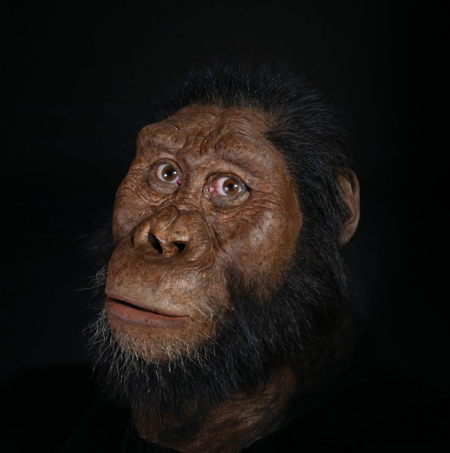 Paleoartist John Gurche reconstructed the face of 'A. ananmensis', building atop scans of the newfound skull.
