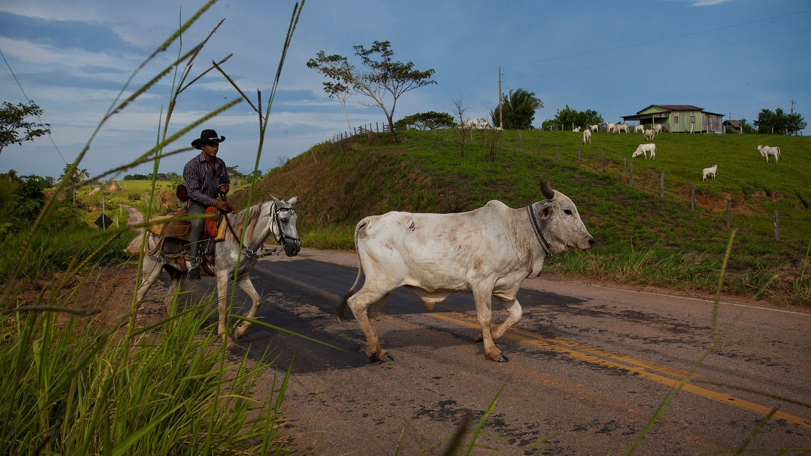A cowboy drives steers in Acre state, Brazil, which is ground zero for a fight over ...