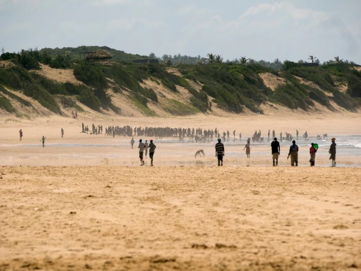Crowds gather around two whales that washed up on this Mozambique beach in April. Marine mammals—both ...