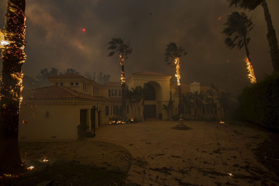 Embers fall from burning palms, and the sun is obscured by smoke as flames close in ...