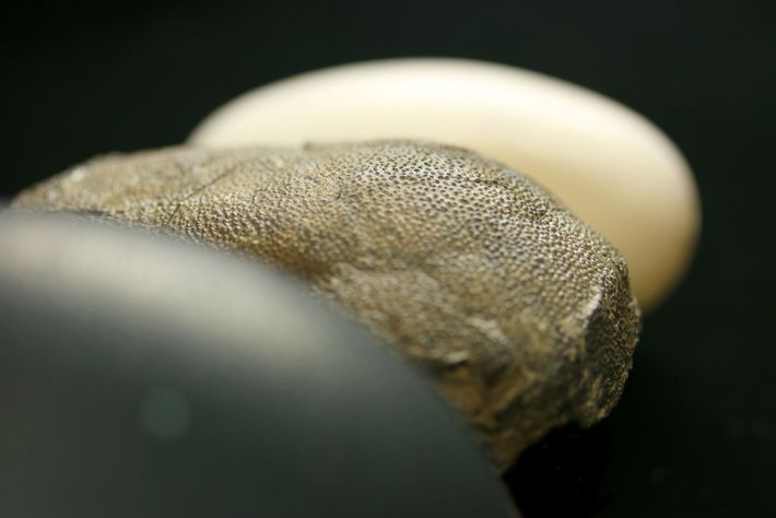 Unlike the colourless eggs of today's alligators (background), the eggs of some theropod dinosaurs had colours ...