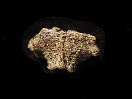 Hints of fossil DNA discovered in dinosaur skull