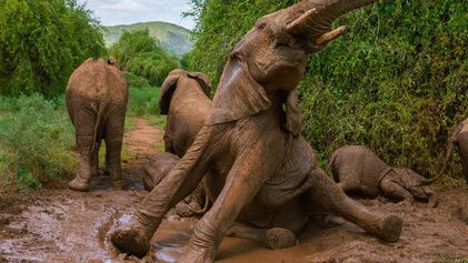 National Geographic's stunning pictures of elephants
