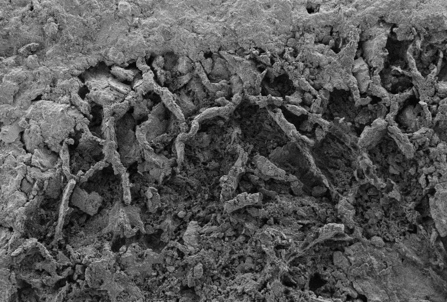 Fossilised fungal filaments are visible in the shale, found in the Democratic Republic of the Congo. ...