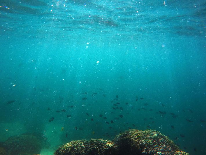 Fish swim over a patch of bleached coral in Kāne'ohe Bay, off the Hawaiian island of ...
