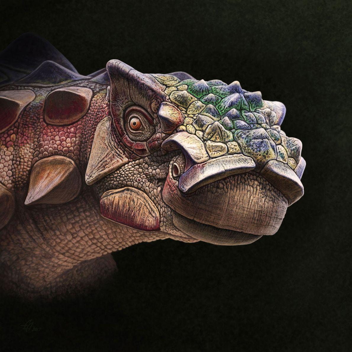 """Akainacephalus"" This finely textured portrait of the armoured ankylosaur 'Akainacephalus johnsoni' offers an unusual window into the ..."