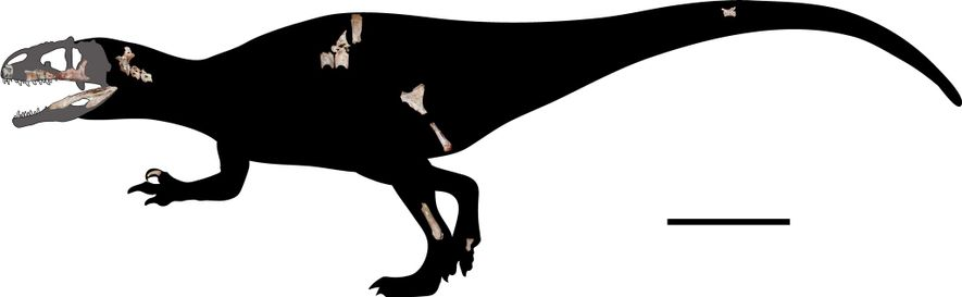 Researchers scaled the 22 newfound fossils to reconstruct the skeleton of Siamraptor suwati. The scale bar ...