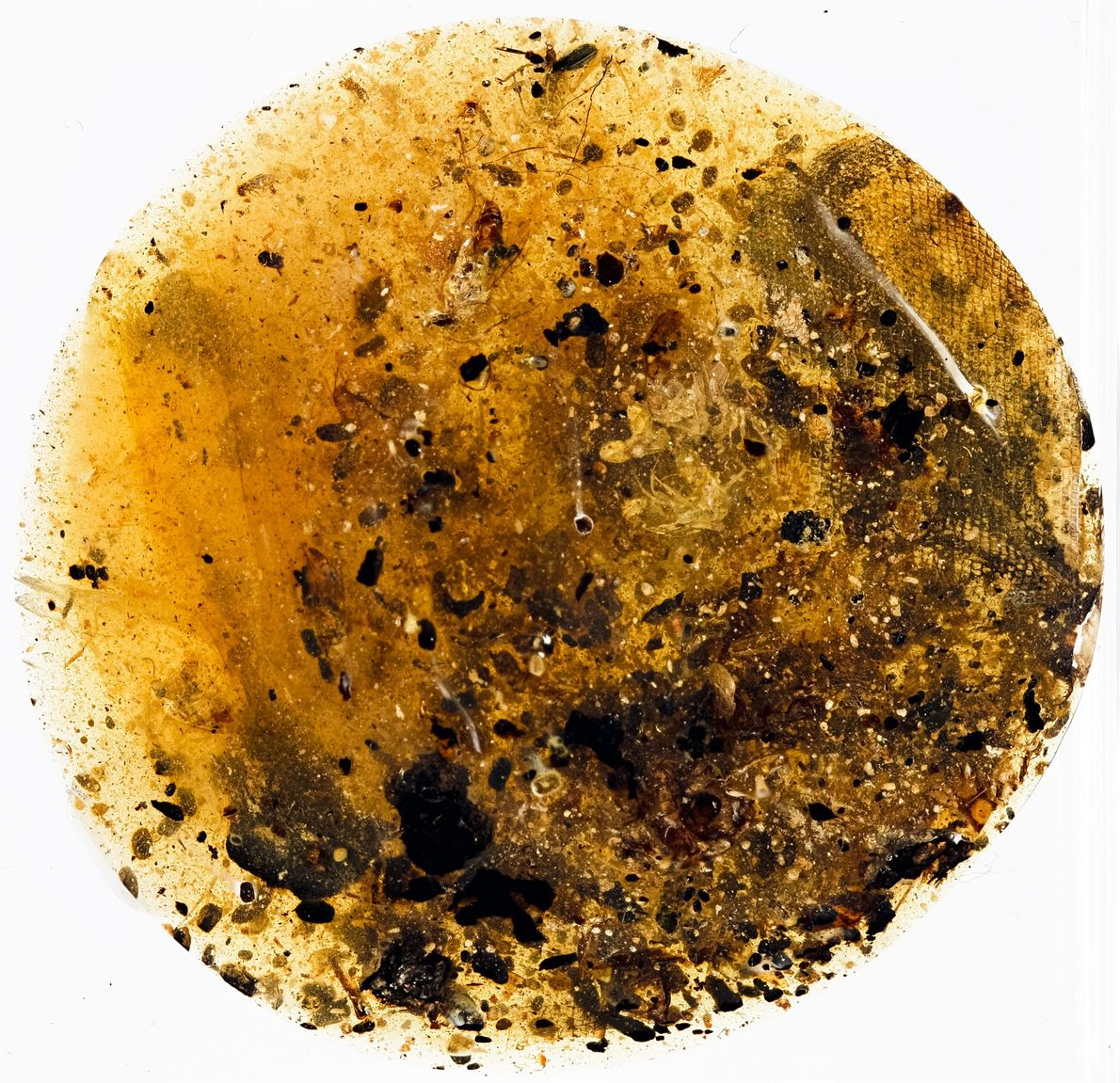 A second amber piece contained what is most likley a sample of ancient snake skin surrounded ...