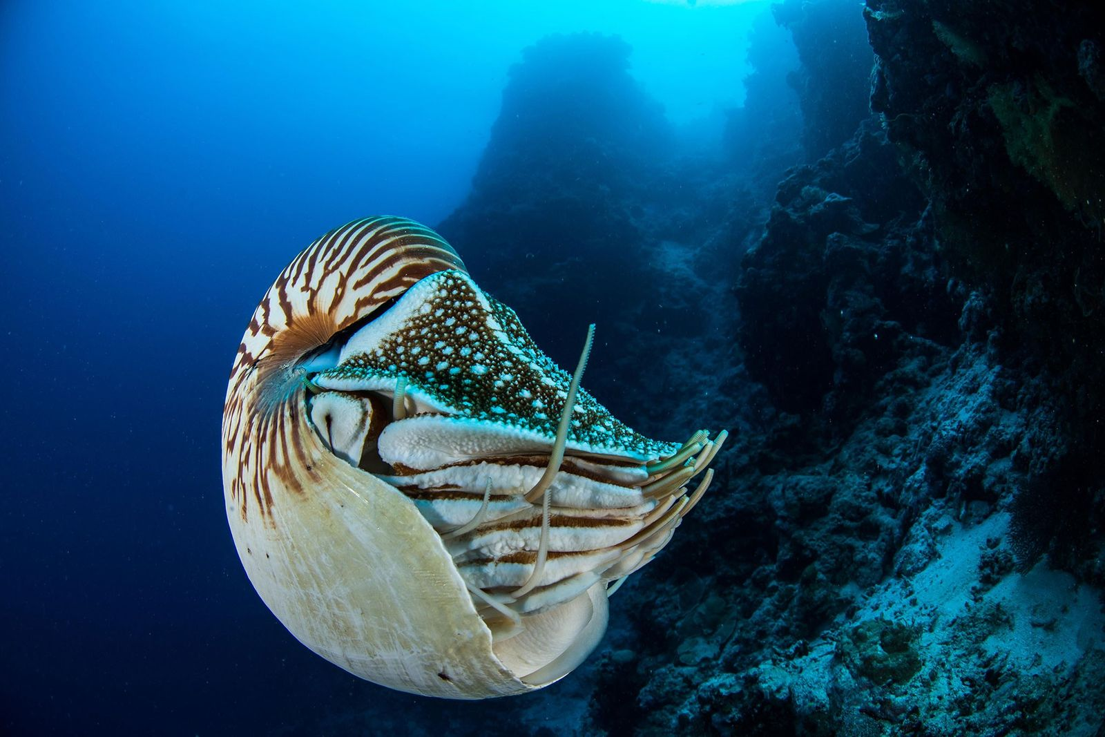 Pictures From Pristine Seas Expeditions in Palau