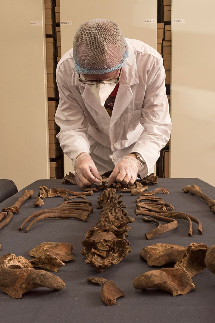 MOLA senior archaeologist Don Walker examines a 1665 Great Plague victim.