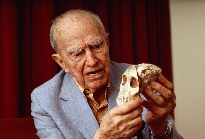 "Raymond Dart, originator of the ""killer ape"" theory of human evolution, holds the skull of the ..."