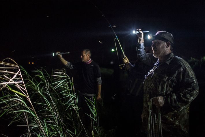 On a night hunt Brett Schick (right), standing on the bank of a canal with fellow ...