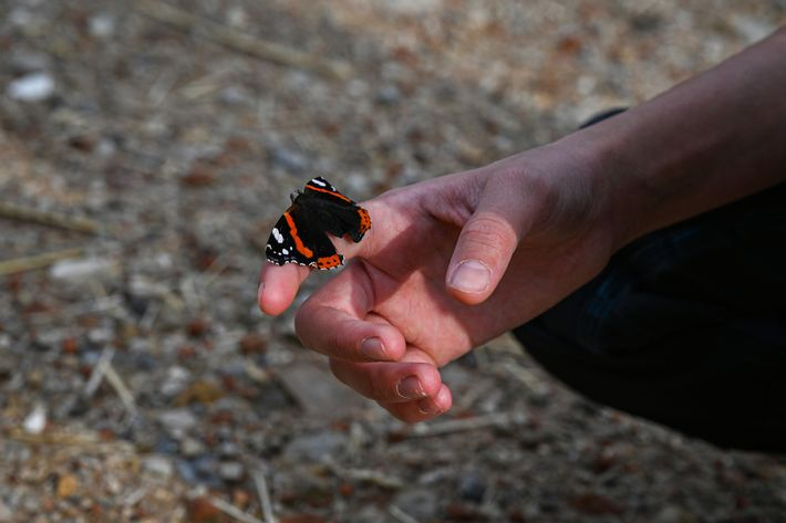 A butterfly pauses on 14-year-old Viola Heigl's hand on her family's farm in Kallmünz, Bavaria. Her ...