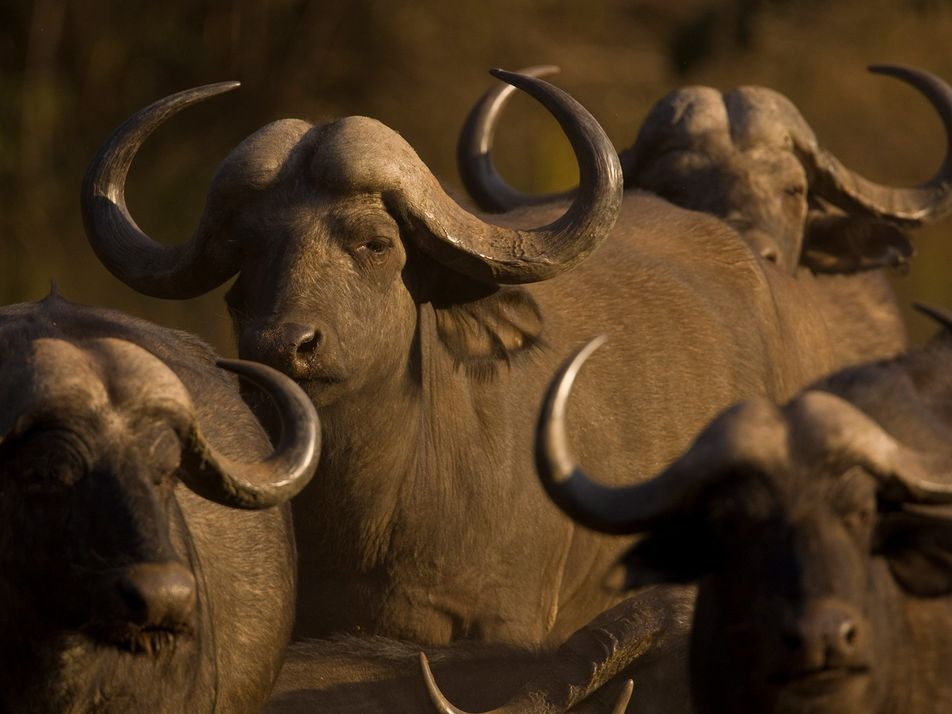 What are Africa's Big Five? Meet the continent's most iconic wildlife