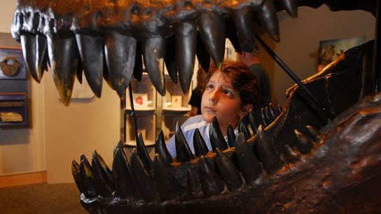 New technology is helping us learn more and more about new dinosaur species, and more about ...