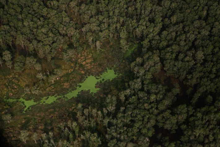 Aerial view of trees in the Cardamom Mountains of Cambodia.