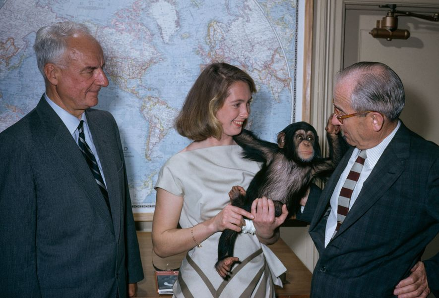 Jane Goodall holds a chimp named Lulu near staff of National Geographic.