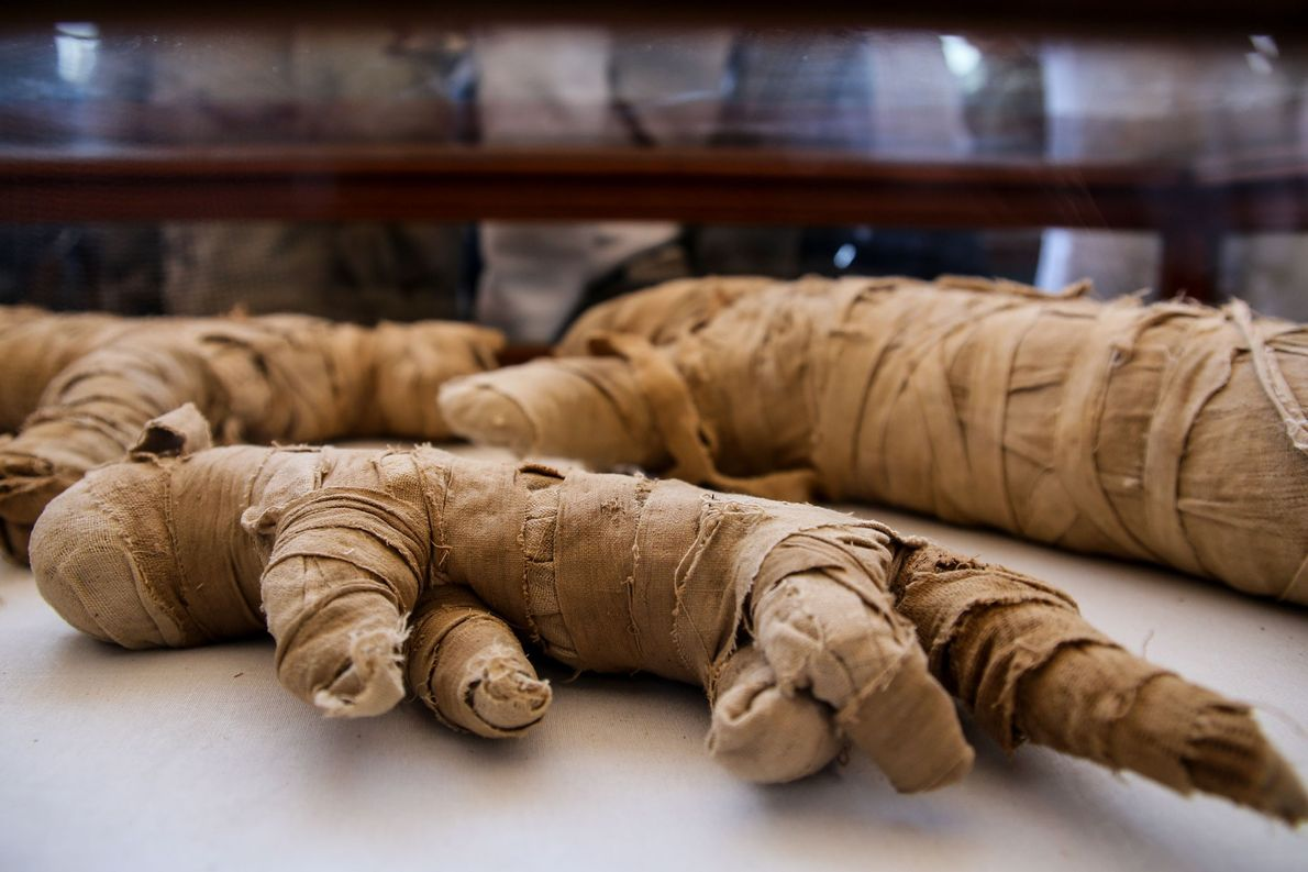The ancient Egyptians mummified millions of animals. These cat mummies would have served as votive offerings ...