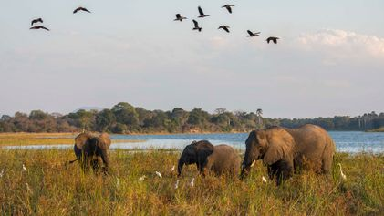 Inside The Duke of Sussex's efforts to preserve African parks
