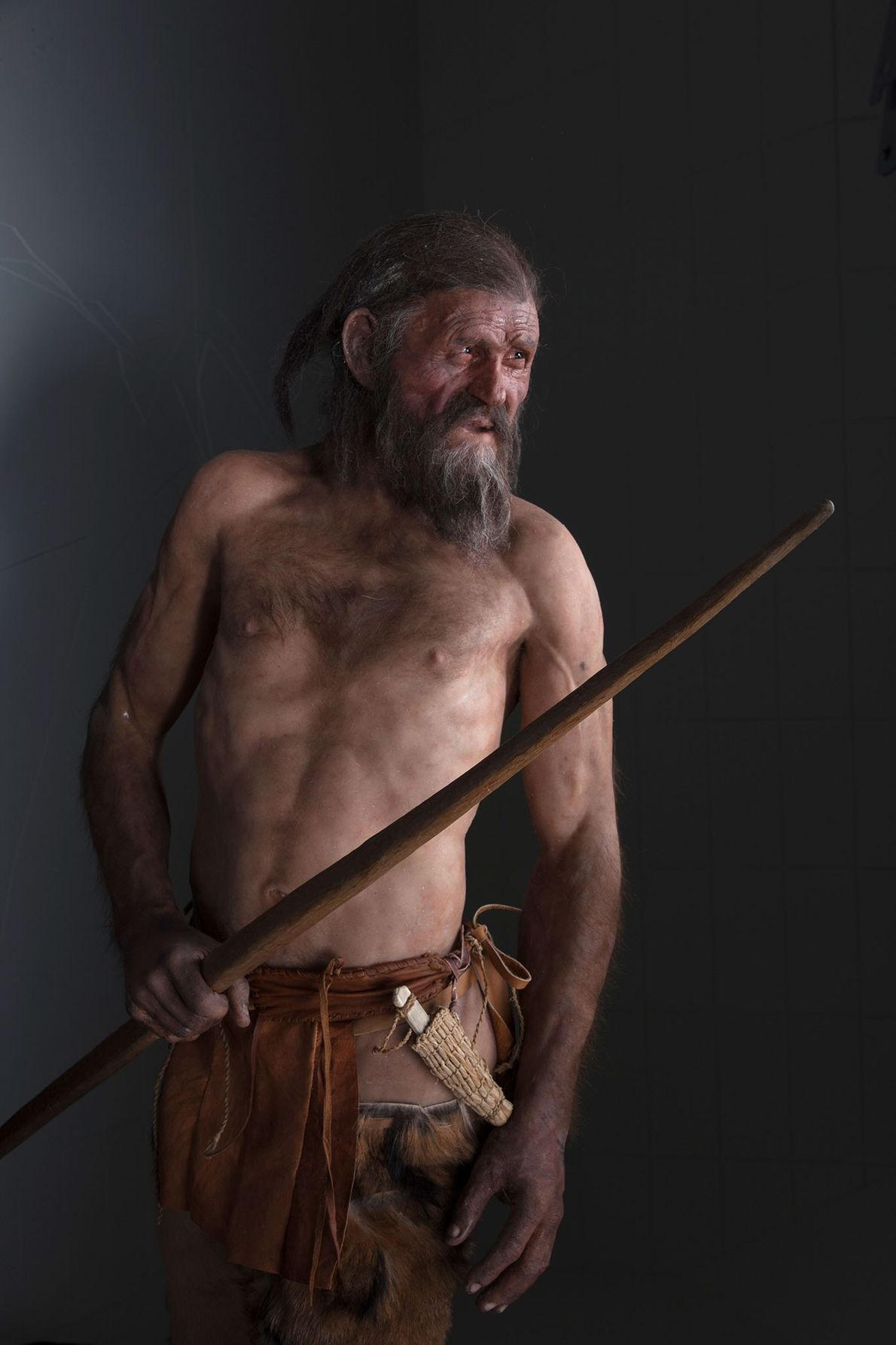A reconstruction of the 40-something Iceman.