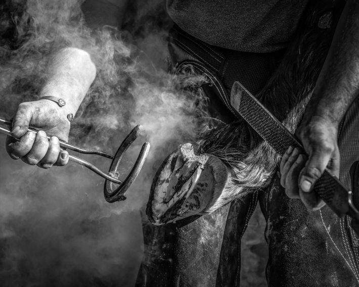 """""""I had the great chance to work alongside a farrier whilst he changed the shoes on ..."""