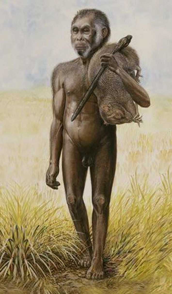 An illustration shows an H. floresinsis male carrying a giant rat over his shoulder.