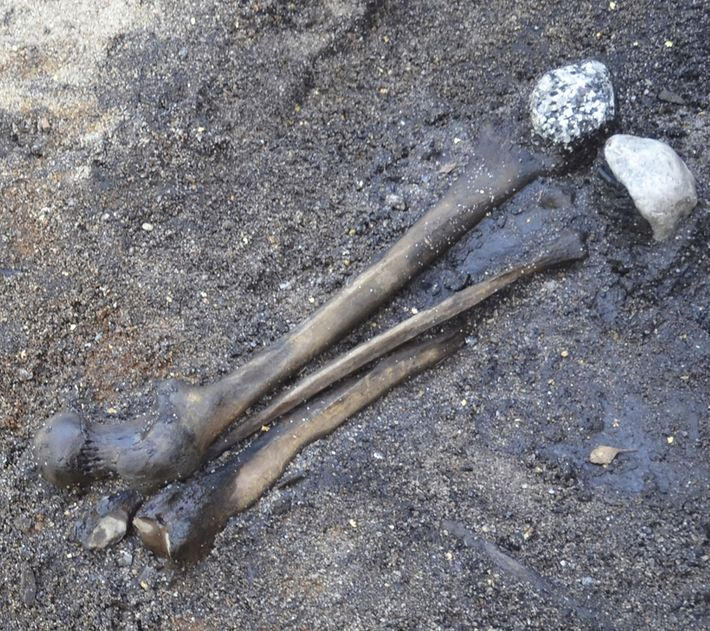 Adult leg bones were gathered from the battlefield and arranged in the wetlands along with non-local ...
