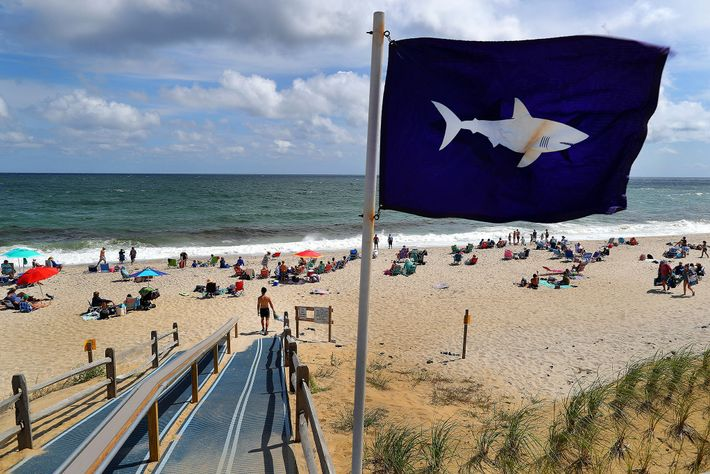 Shark sightings are an almost daily occurrence on Cape Cod over the summer. Town administrators and ...