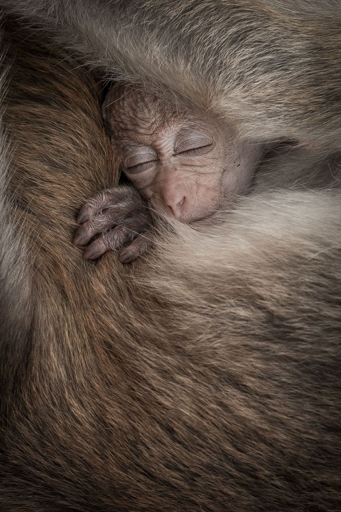 Your Shot photographer Senthi Aathavan Sethiverl captured this moment between a baby monkey and its mother ...