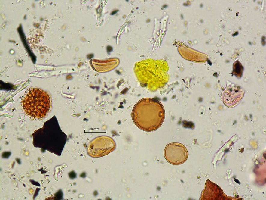 Researchers also analysed pollen found in the coprolite, which revealed that the person also ate flowers ...