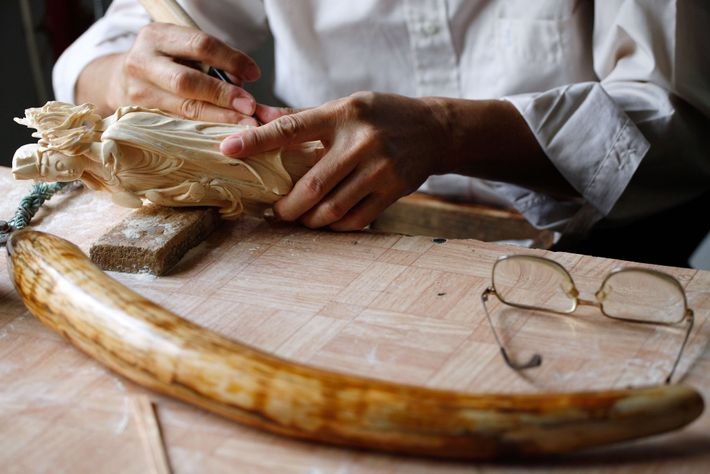 A worker in Guangzhou in 2009 carves ivory into the shape of a Chinese deity. Government-licensed ...